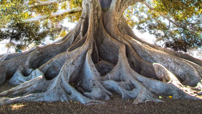 tree-roots-charity-donation-photo-jeremy-bishop