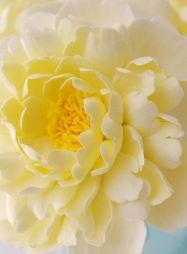 soft yellow dahlia via pinterest
