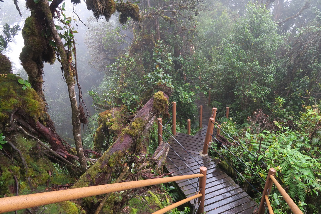 Mossy Forest in Cameron Highlands My Workaway experience in Malaysia