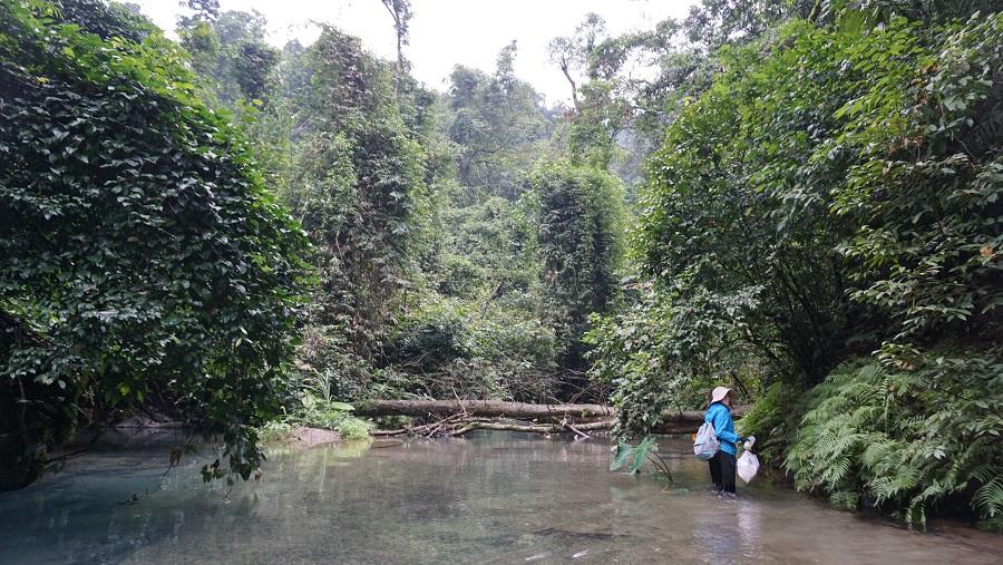 Jungle trek in Phong Nha Ke Bang Budget Breakdown Travelling as a Couple in Vietnam