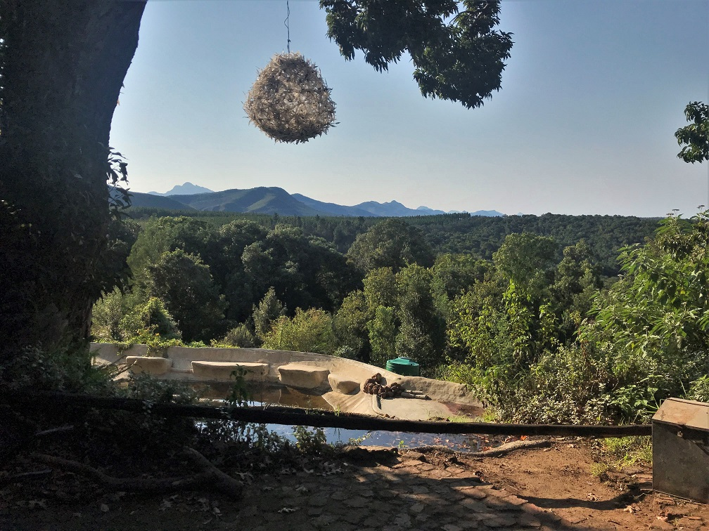 Wild Spirits Lodge The Budget Traveller's Guide to the Garden Route Road Trip