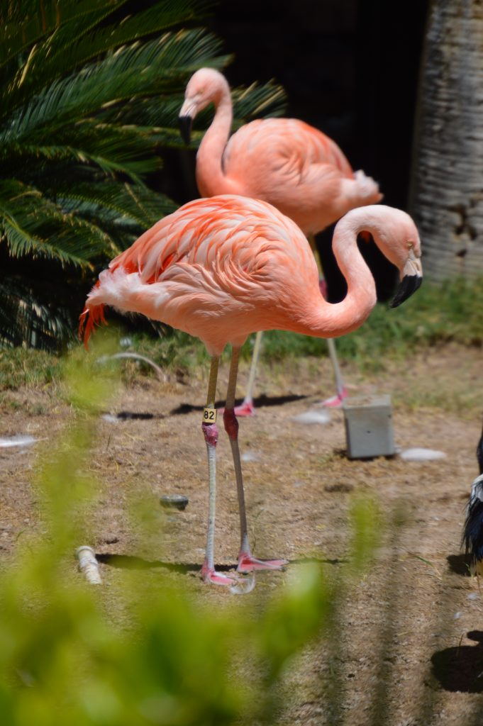 The flamingos are so photogenic and beautiful to see!
