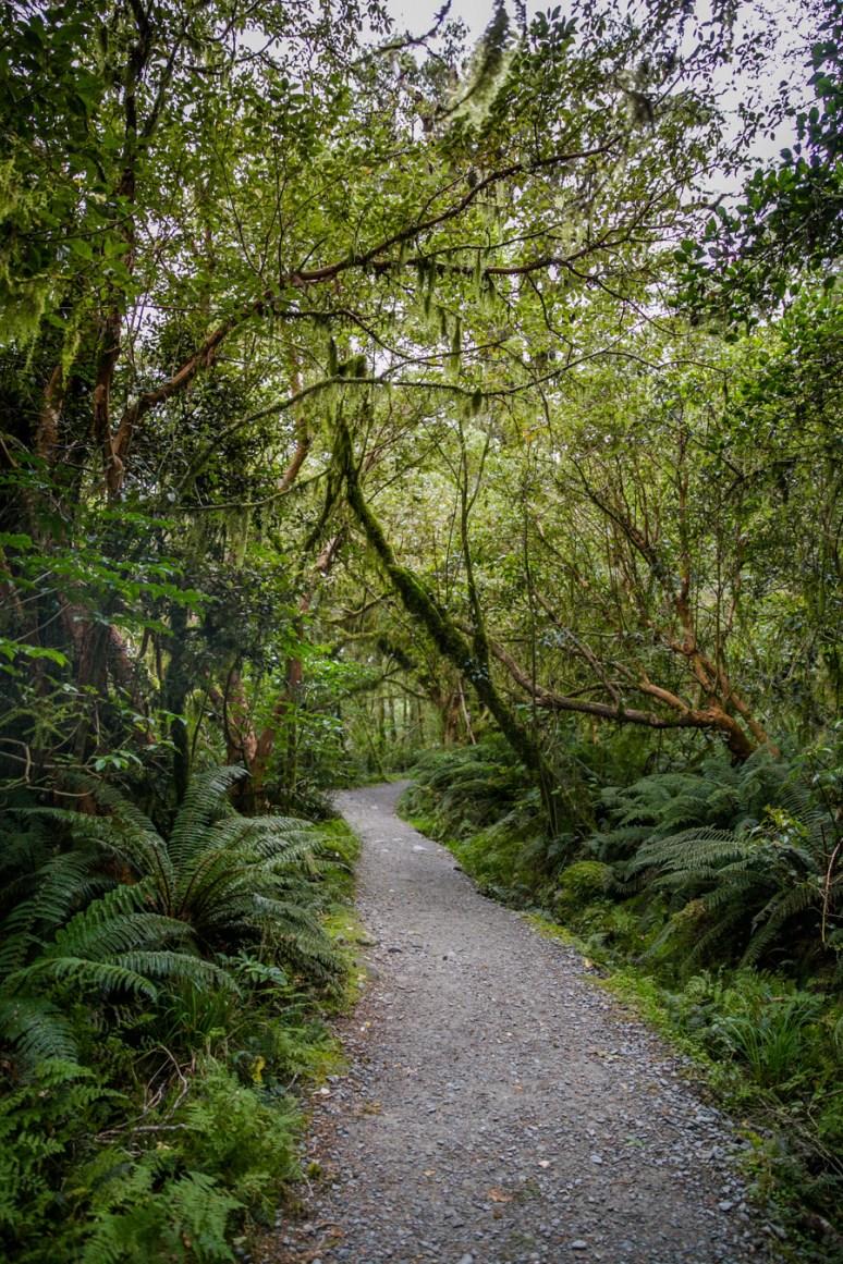 Milford Sound-1