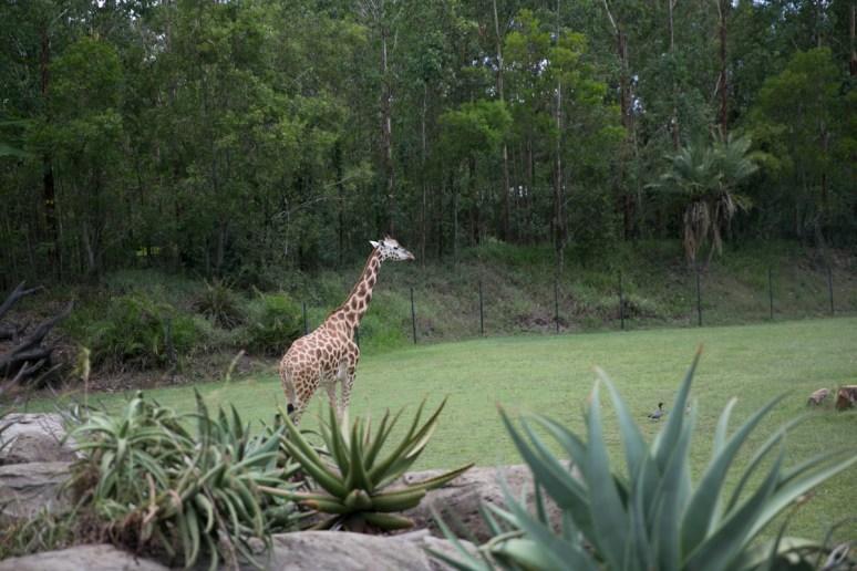 Australia Zoo-29