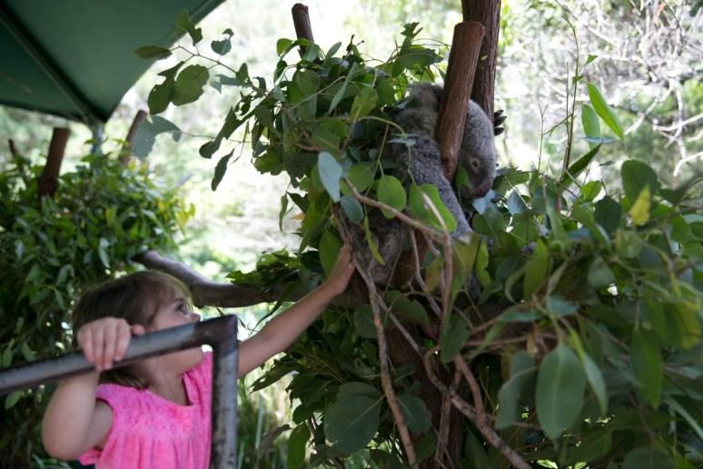 Australia Zoo-41