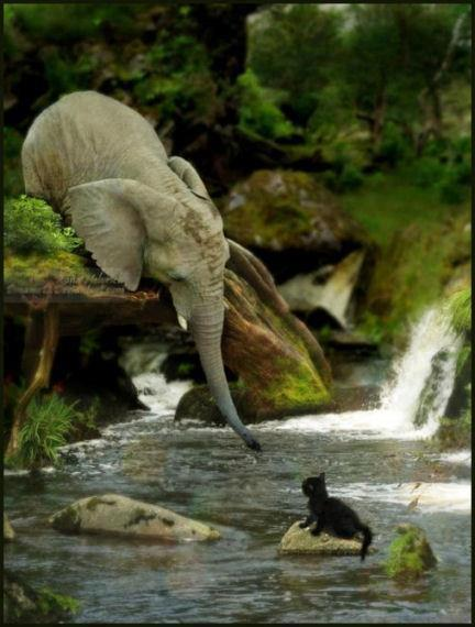 Elephant&Cat