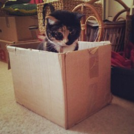 Tilly's Box