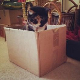 Tilly's Box