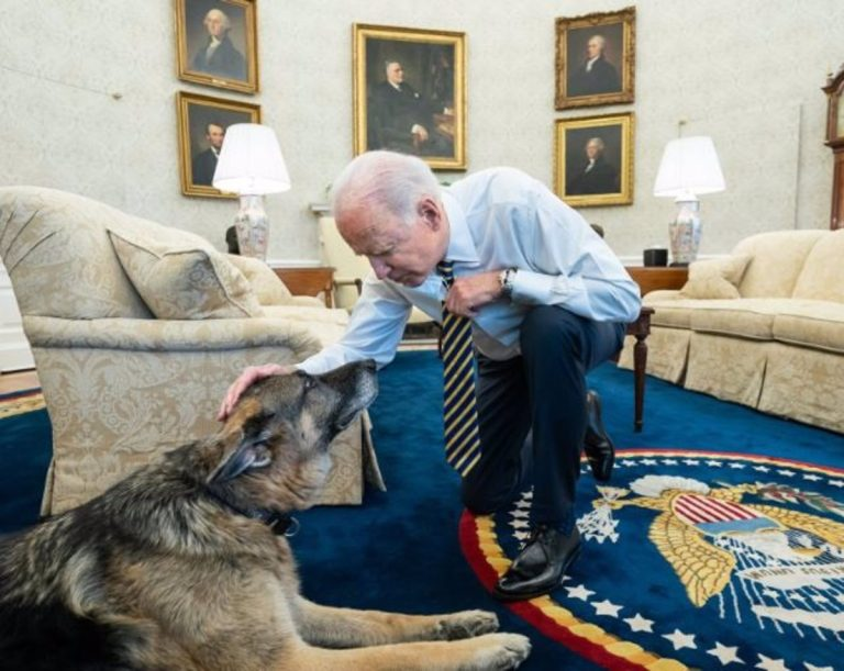 The White House announces the death of 'Champ', one of President Biden's dogs