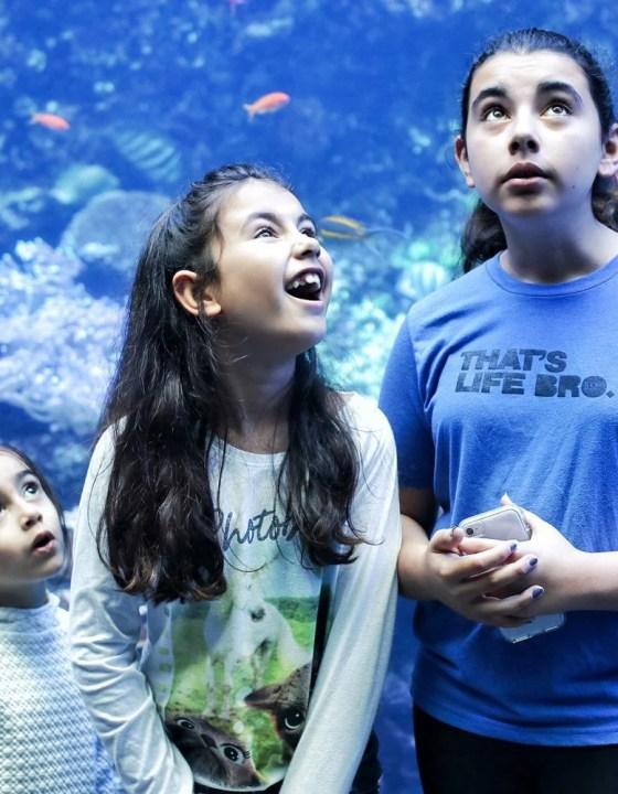 Things You Must See at Georgia Aquarium