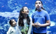 georgia aquarium, atlanta attractions, things to do in atlanta, top attractions atlanta, things to do with kids in atlanta, georgia tourist attraction, things to do in georgia, aquarium, atlanta georgia, downtown atlanta, things to do in downtown Atlanta