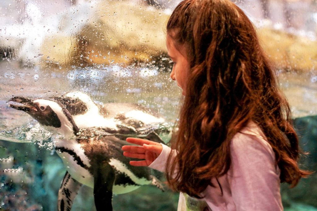 georgia aquarium, atlanta attractions, things to do in atlanta, top attractions atlanta, things to do with kids in atlanta, georgia tourist attraction, things to do in georgia, aquarium, atlanta georgia, downtown atlanta, things to do in downtown Atlanta, travel blogger, travel blog, mom blogger, family blog