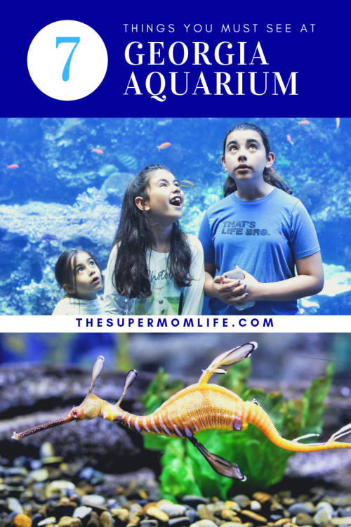Here are the things you must see at Georgia Aquarium in Atlanta, GA