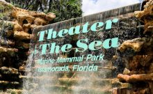 theater of the sea, sea turtles, things to do in florida, swimming with dolphins, florida, key west, islamorada, florida, beach, florida beach, road trip, family road trip, family vacation, travel, trip, mommy blog, mom blogger, family blog, family influencer, instagram, mother, father, tween blog, dad blog, travel family blog, United States, family travel blogs, 2018, mom blog, top, best, mommy blogger, daddy blog, tween blogger, child brand influencer, the super mom life, dad blog, dad blogger