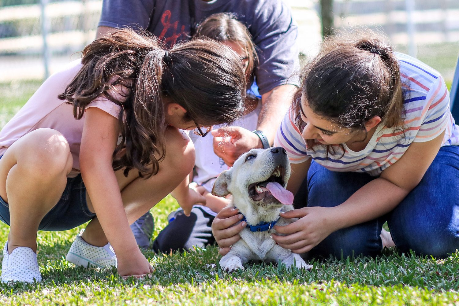 do dogs help with anxiety, anxiety, dogs, puppy, dog, Sharpei, Shar Pei, rescue dog, rescue puppy, getting a dog, mom blog, mom blogger, mommy blog, mommy blogger, 2018, family blog, parenting blog, the super mom life, thesupermomlife, parenting blogger, family blogger