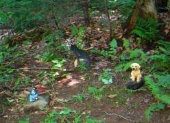 Lily Dale Pet Cemetery Sop