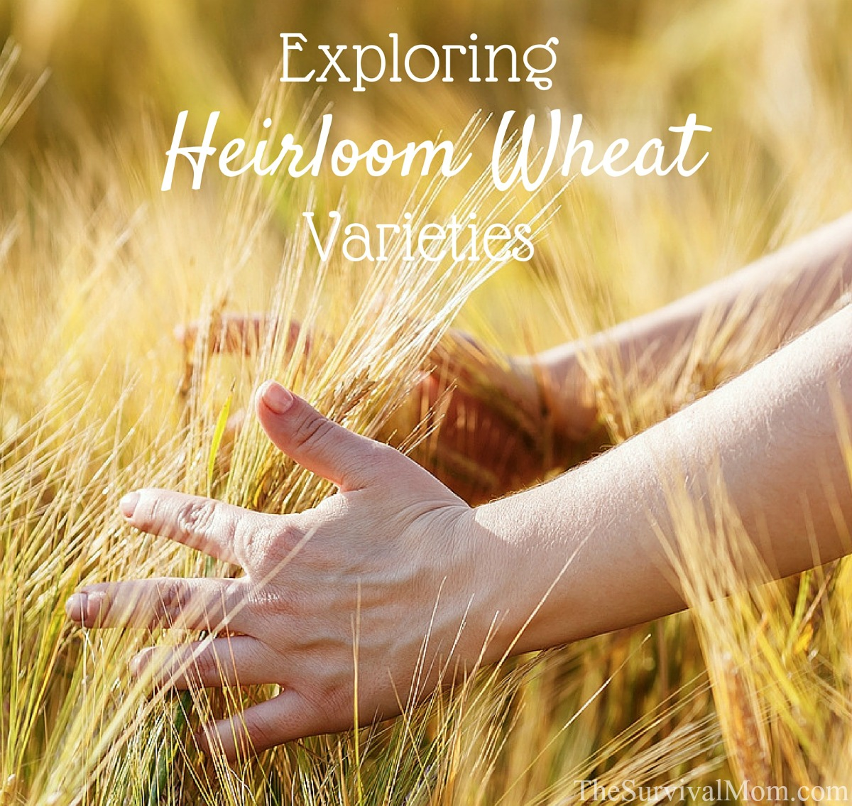 heirloom wheat varieties