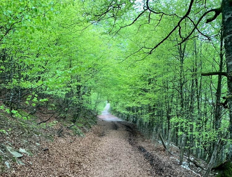 Camino de Santiago: Fairytale Forest