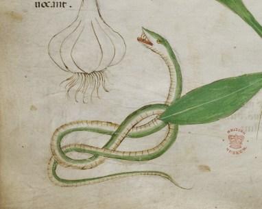 Manuscrit Sloane 4016 (3)