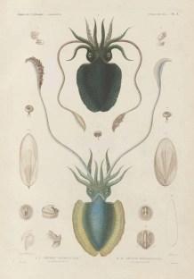 Voyage de découvertes de l'Astrolabe, exécuté par ordre du roi, pendant les années 1826-1827-1828-1829, sous le commandement de M. J. Dumont d'Urville - Page 009
