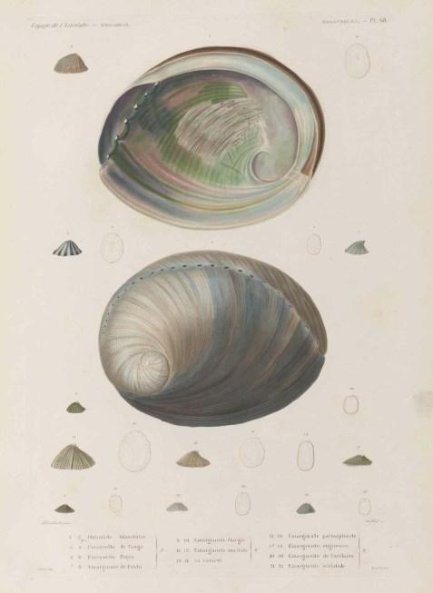 Voyage de découvertes de l'Astrolabe, exécuté par ordre du roi, pendant les années 1826-1827-1828-1829, sous le commandement de M. J. Dumont d'Urville - Page 147