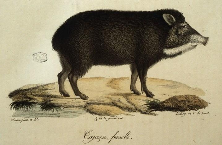 Histoire naturelle des mammifères, Wermer, Maréchal, Huet, C. de Lasteyrie, Etienne Geoffroy Saint-Hilaire, Frédéric Cuvier - 1