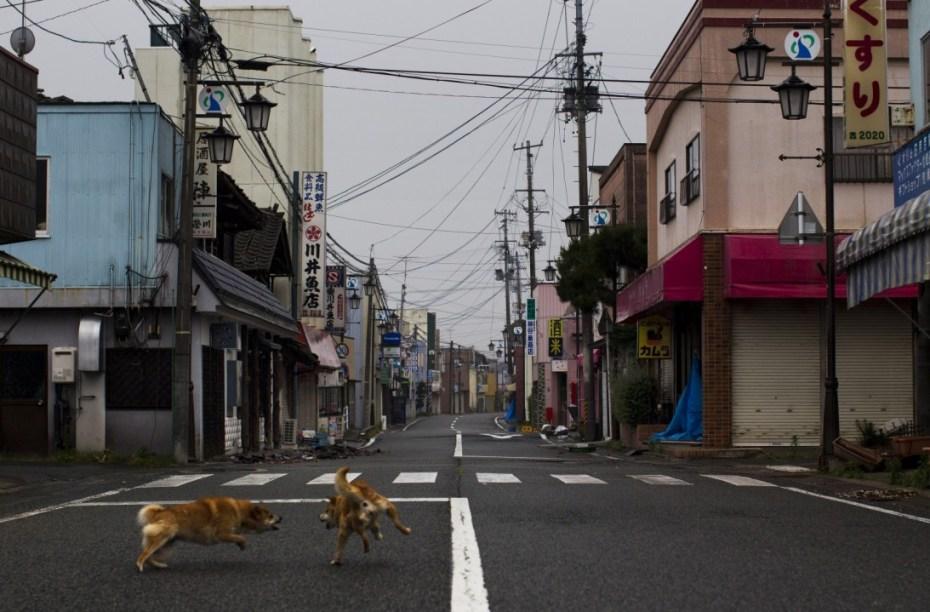 Après le tsunami Fukushima