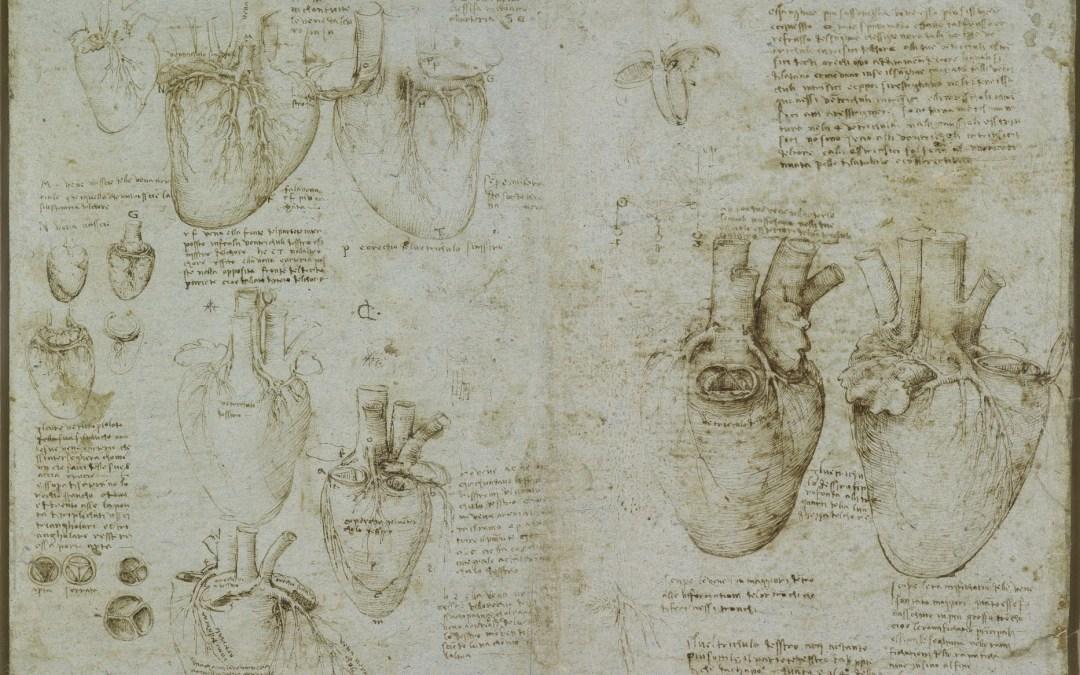 Le cœur de Leonardo