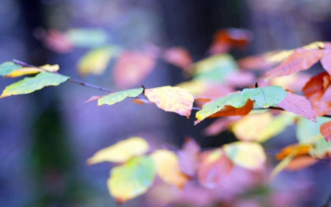 L'automne enville