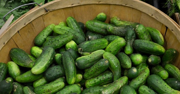 St. Lawrence Market cucumbers