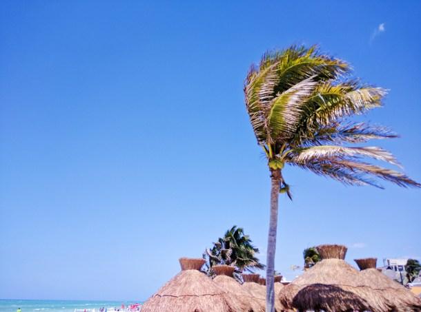 Palmera en Puerto Progreso, Yucatán