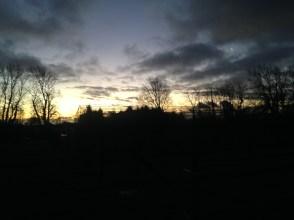 Over our early morning garden walk