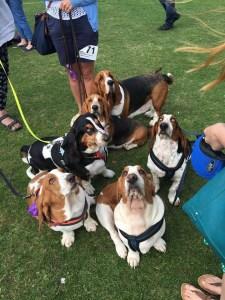 Lydiard Bark Dog Show 2017