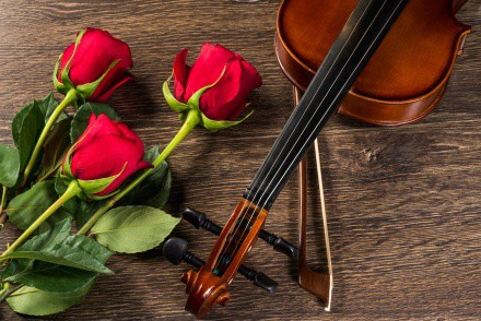 violin rose and music books