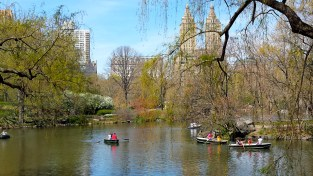 Rowing around the lake in Central Park