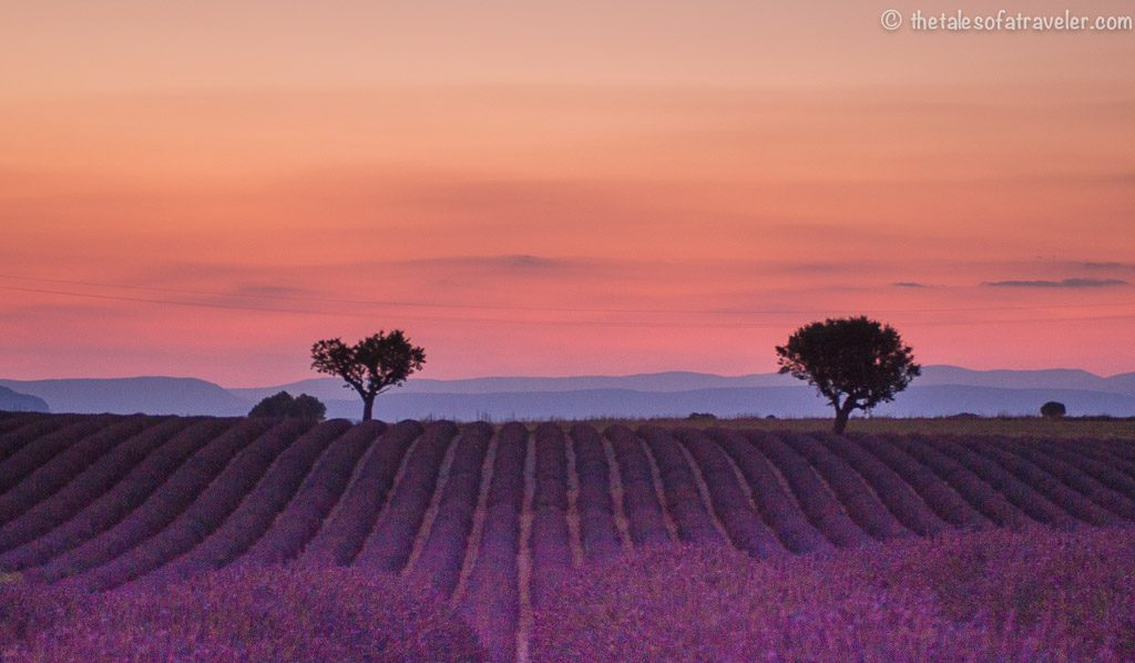 Best Lavender Fields in Provence France Valensole
