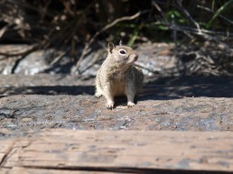 Gopher Pose