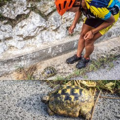 A women in bicycle clothes next to a turtle