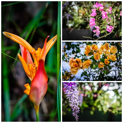 collage of flowers in French Guiana