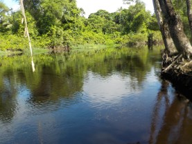 A river in Guyana