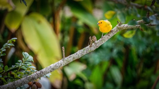 Yellow bird standing on a branch