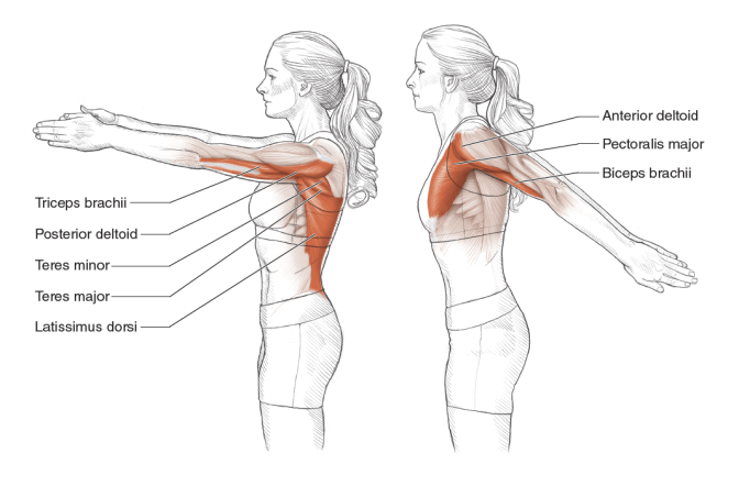 illustration of Pectoralis Major/ Minor stretching to avoid Cycling Pains