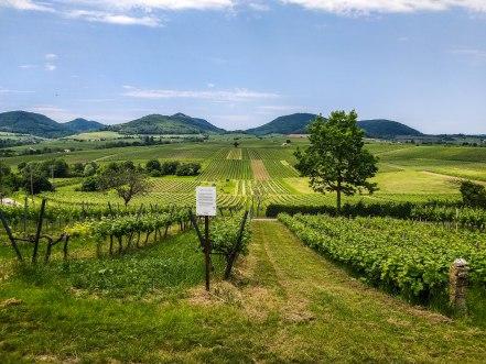 Vineyards and mountains in Rhineland Palatinate,Germany