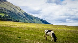 A horse on a meadow in the mountains