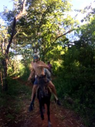 man riding a horse in the jungle