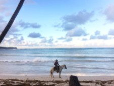 sandy beach with a palm and male horse rider in the Dominican Republic