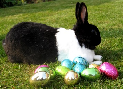 The Easter Bunny tries to get laid
