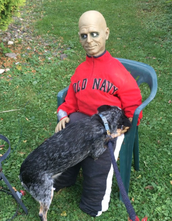 The one decoration my dog is not afraid of: zombie man in old navy fleece. She stops to kiss him every time we walk by.
