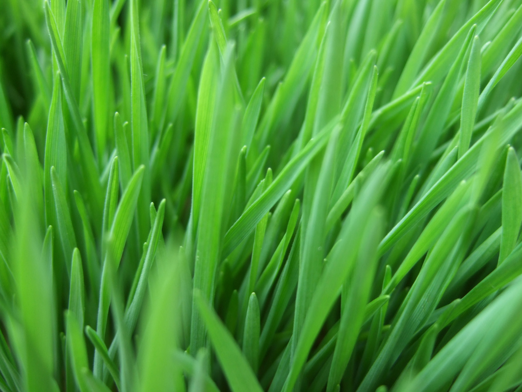 The Effects of Location on the Growth of Grass