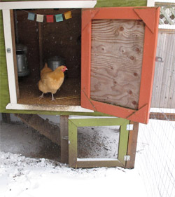 freaked chicken